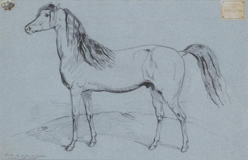 CARLOS MARÍA ISIDRO DE BORBÓN (1788-1855)Estudio de caballo