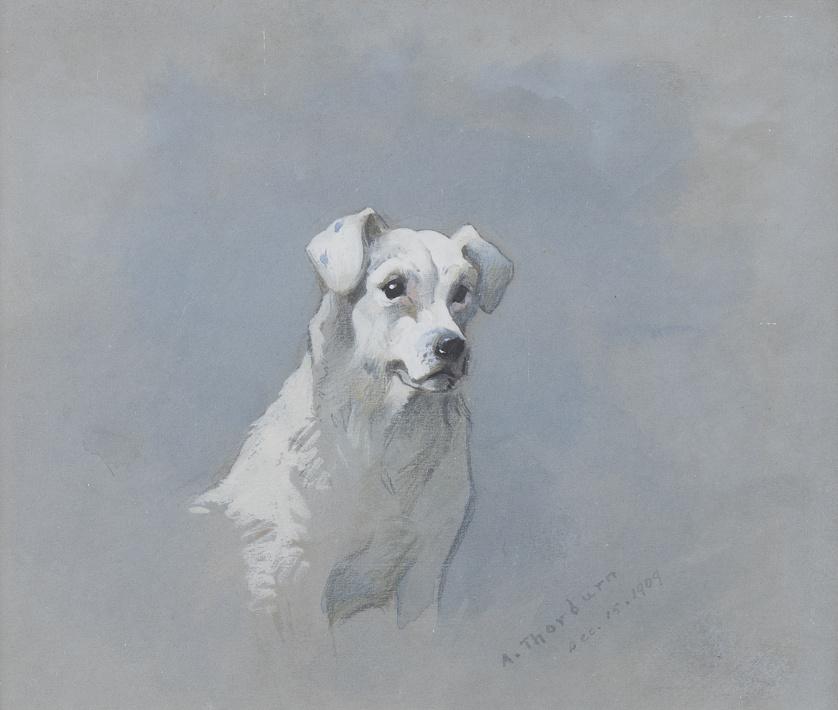 ARCHIBALD THORBURN (1860-1935)Estudio de Terrier